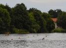 Celler Triathlon 2014 - Öffentliches Training Schwimmen_9